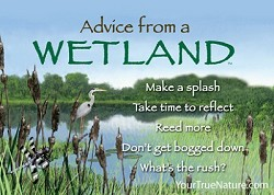 Magnet Advice from a Wetland