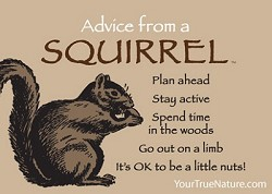 Magnet Advice from a Squirrel