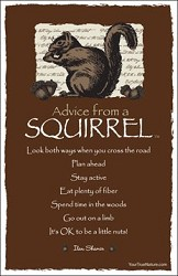 Postcard Advice from a Squirrel