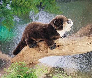 Puppet River Otter,2266-
