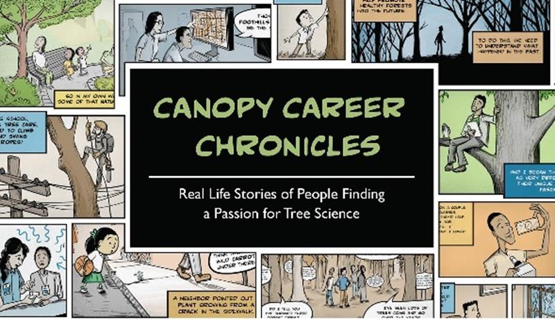 Canopy Career Chronicles