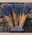 Lavender Bunch,064B5001