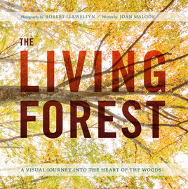 The Living Forest,9781604697124