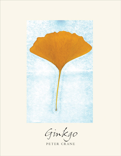 Ginkgo; The Tree that Time Forgot PB,9780300213829