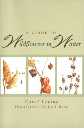 Guide to Wildflowers in Winter,9780300065602