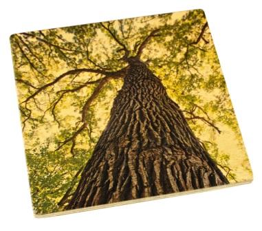 Arboretum Wood Coaster - Oak