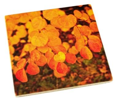 Arboretum Wood Coaster - Fall Leaf