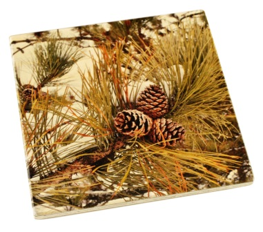 Arboretum Wood Coaster - Pine in Snow