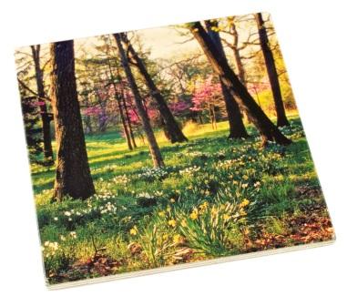 Arboretum Wood Coaster - Daffodil Glade