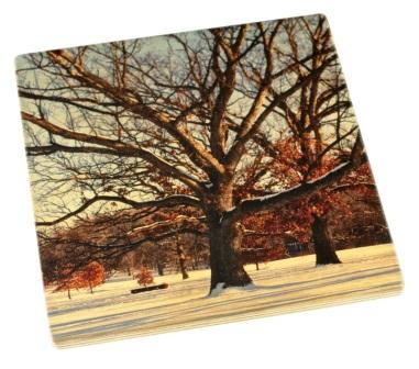 Arboretum Wood Coaster - Winter Trees