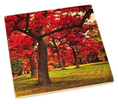Arboretum Wood Coaster - Red Fall Color