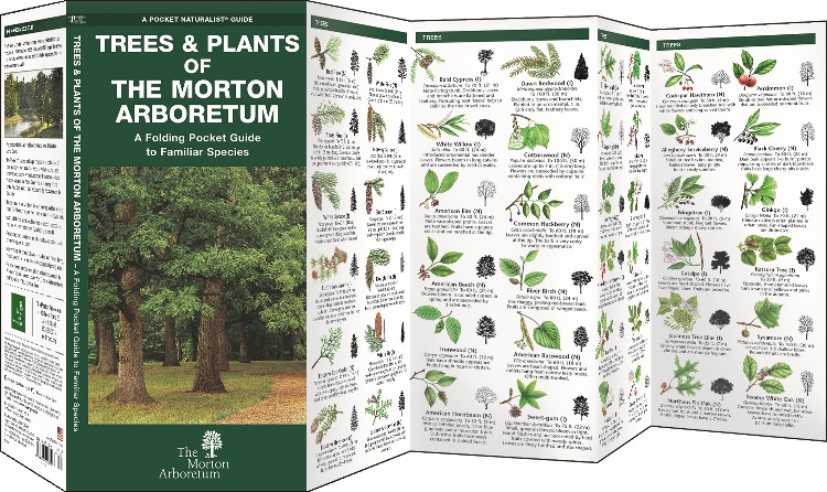 Pocket Guide: Trees & Plants of The Morton Arboretum