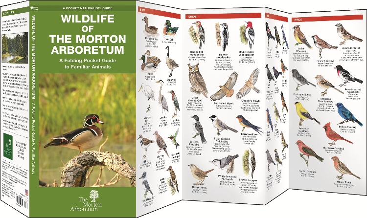 Wildlife of The Morton Arboretum: Pocket Guide