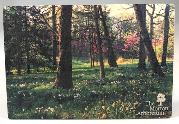 Arboretum Spring Wood Postcard,54197